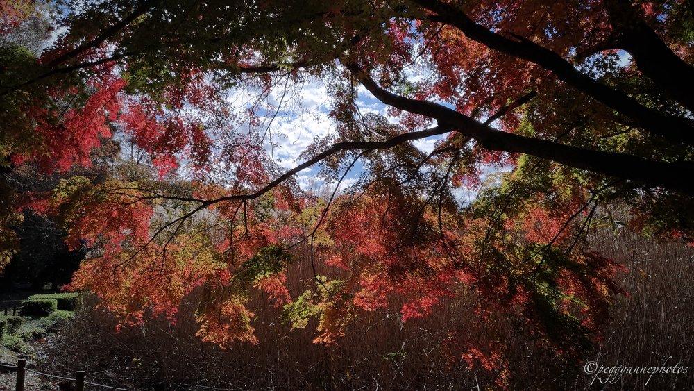 Doho Park 3.jpg