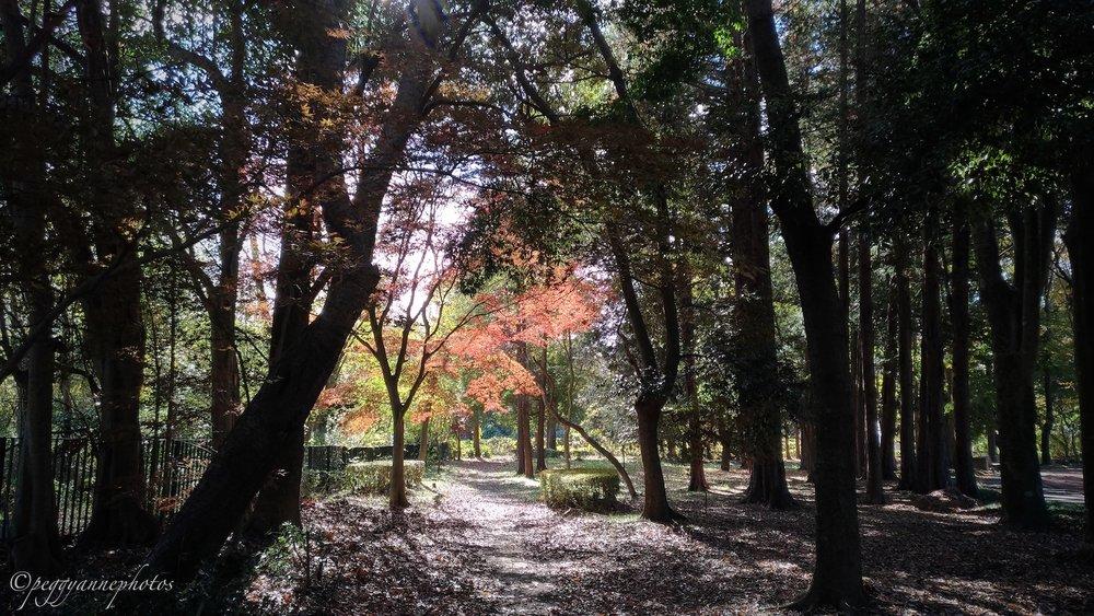 Doho Park 4.jpg