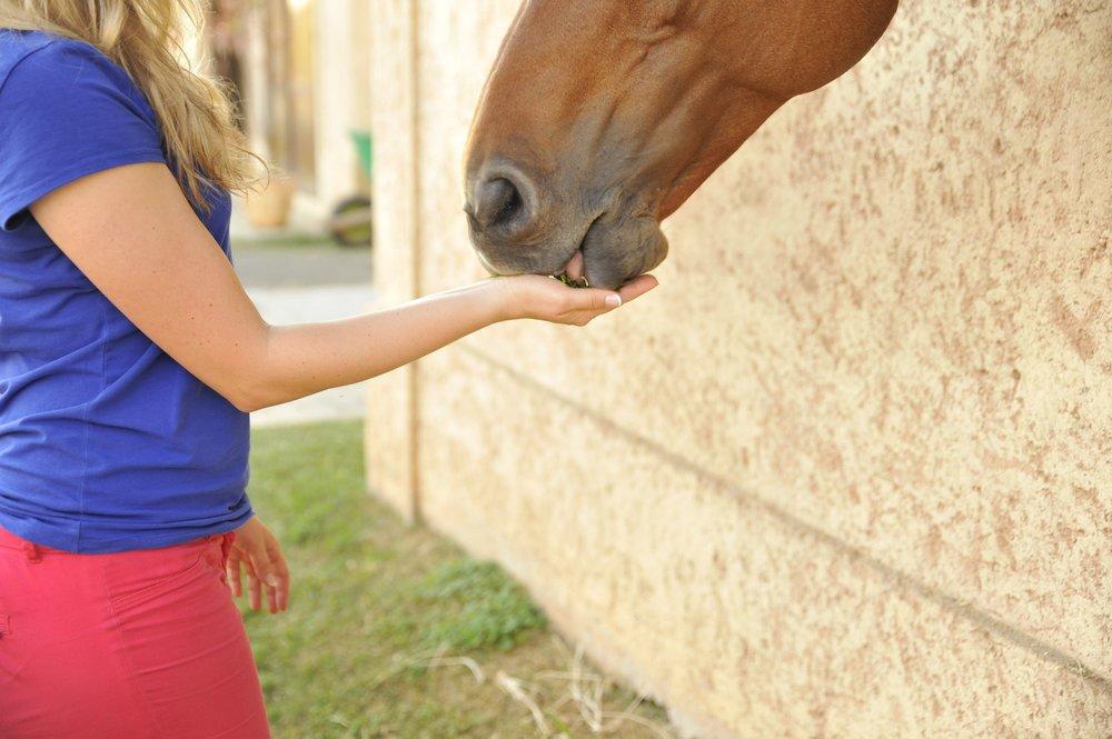 horse-2464220_1920.jpg