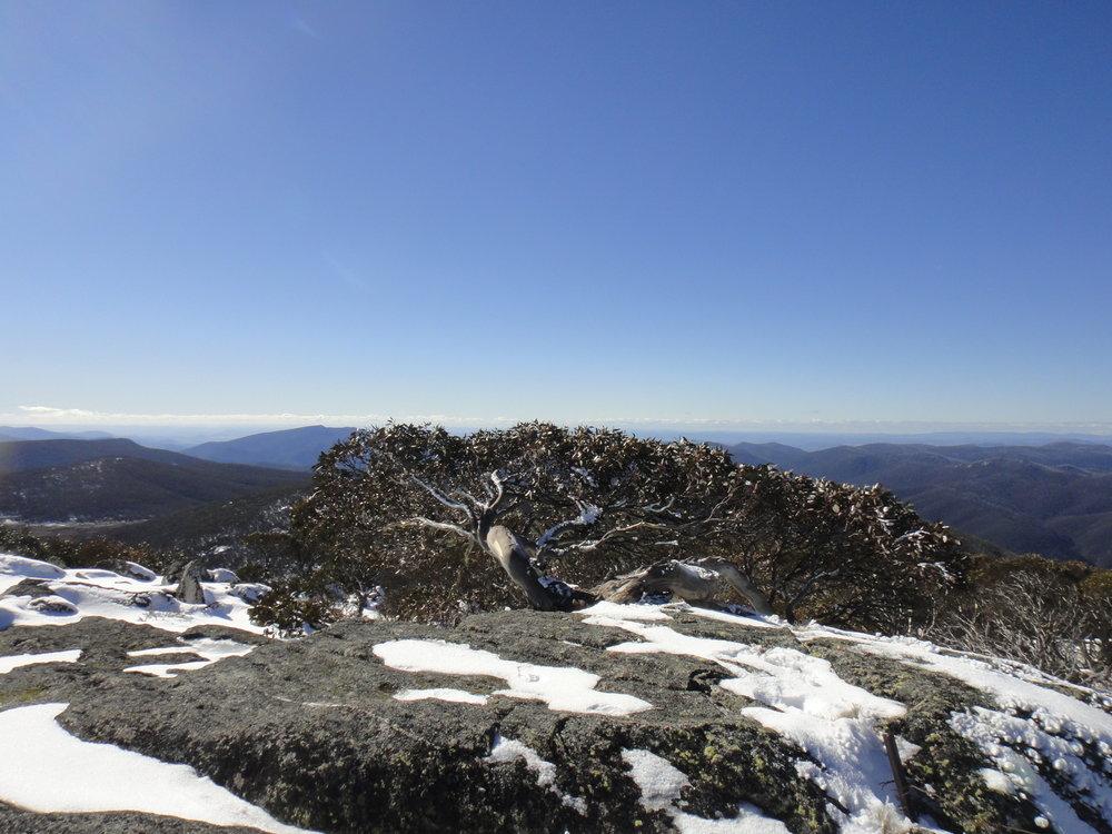 Snow Gum, Mt Gingerra