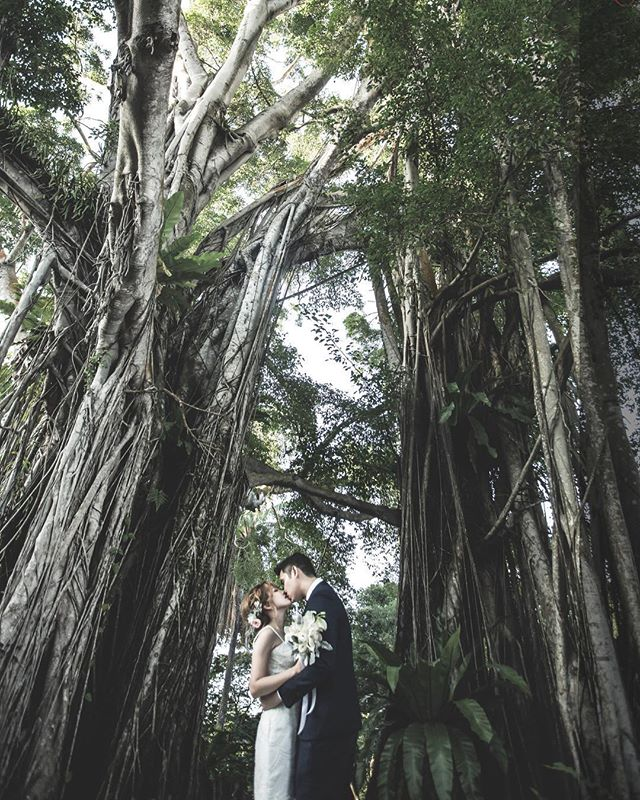 """""""The trees will stand tall for us, just like me, being your pillar of support.."""" Contact at www.eternal-pixels.com (website) 