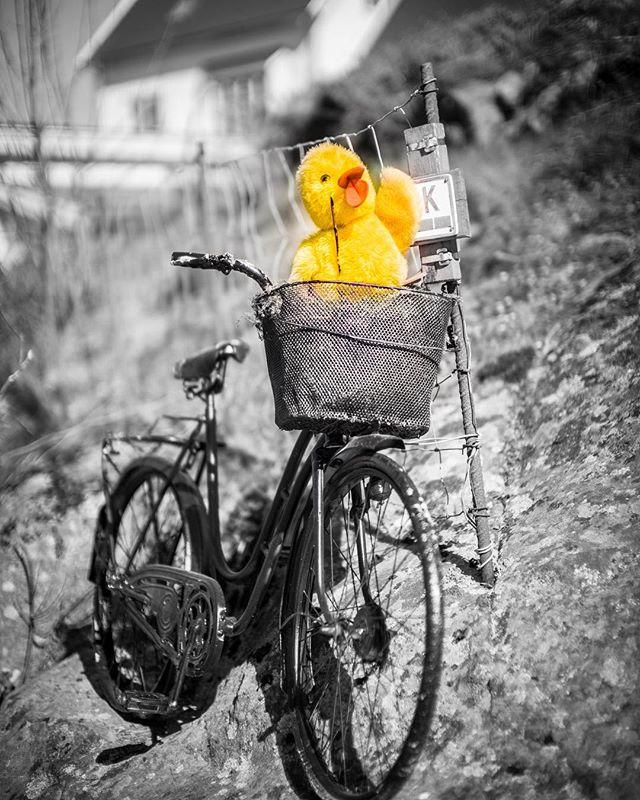 Happy eastern 🐥 www.knagit.com - - -  #baw #cycling #cyclingpics #noctilux095 #m10d #blackandwhite #pw_magazine #streetgram #leicamoment #leicaphotography #leicacamera #leicam #stavangersentrum #streetartstavanger #streetphotography #stavanger #getoutside #stavangerturistforening  #leicanorway #leicasweden #leicaphotography #leicampsafari #leicalimitededition #photography #leicaphoto #outsideisfree #leicacamera  #leicagram
