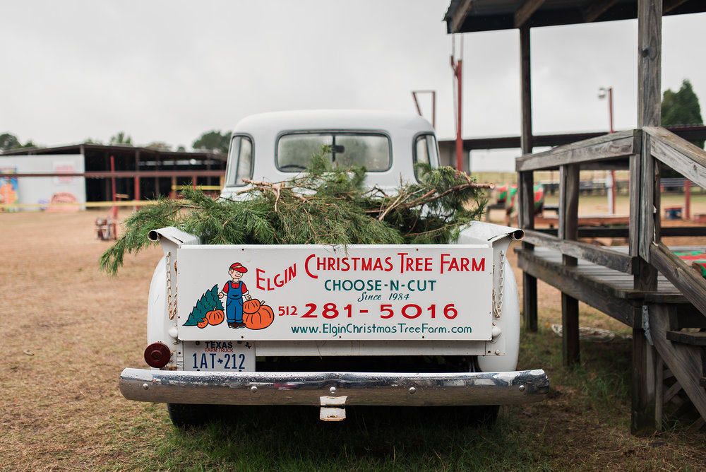 elgin-christmas-tree-farm-photography-web.jpg