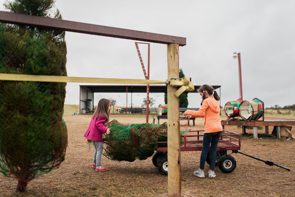 kids-loading-up-christmas-tree-web.jpg