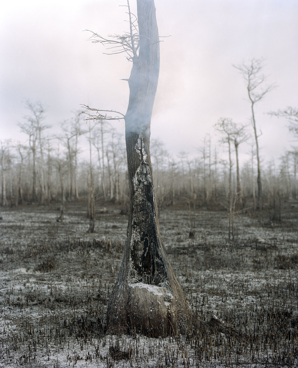 020_burnt-tree.jpg