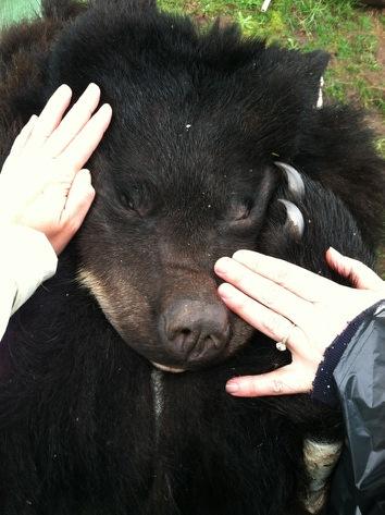 bearandhands.jpg