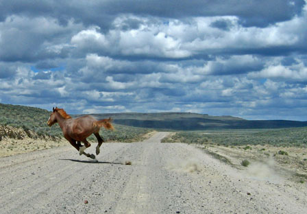 wild-horse-running