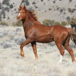 horsejunipers