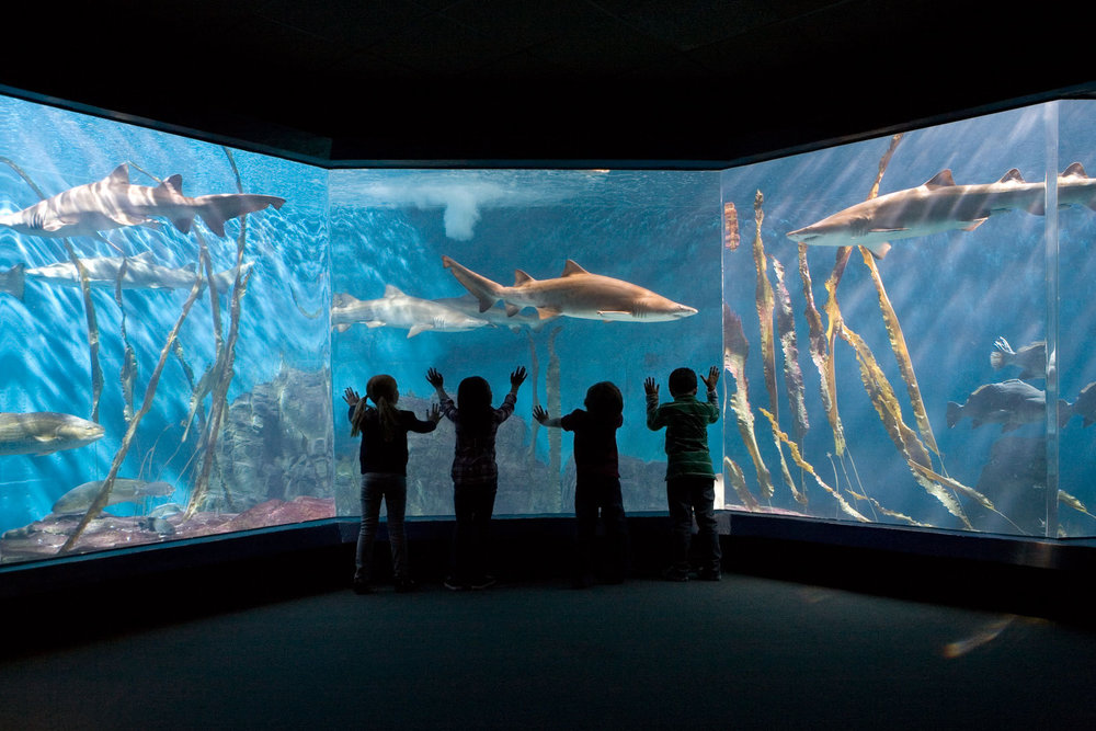 178_1maritime_aquarium_shark_tank.jpg