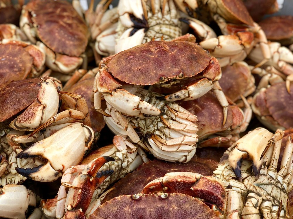 Our boat's Jonah Crab; a local and abundant seafood source we use throughout our menu!