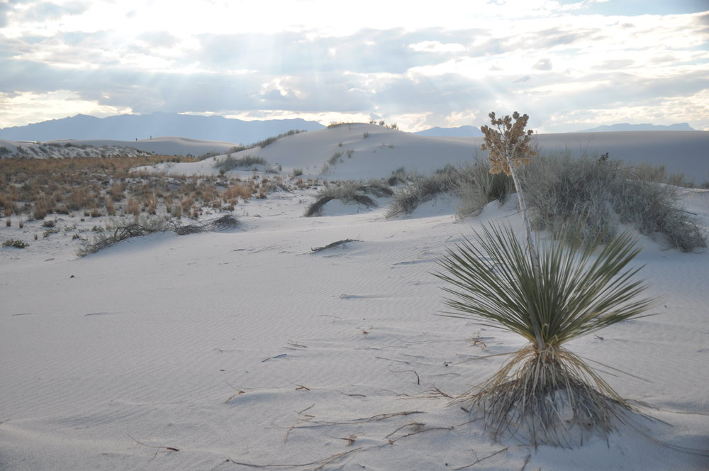 White Sands by Alamogordo
