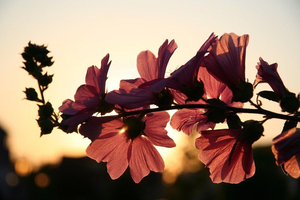 flower-646127_1920.jpg