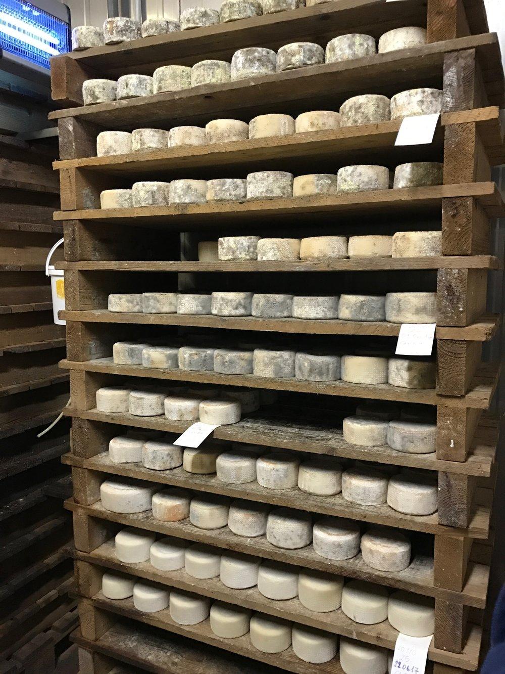 Toia heeft kaas voor het kiezen
