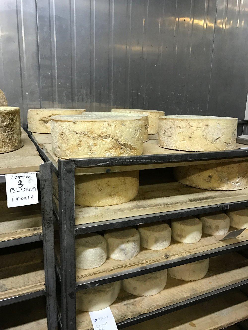 Italiaanse kazen