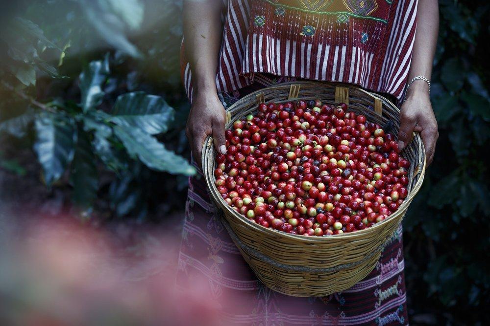 Toia Italiaanse koffie cultuur