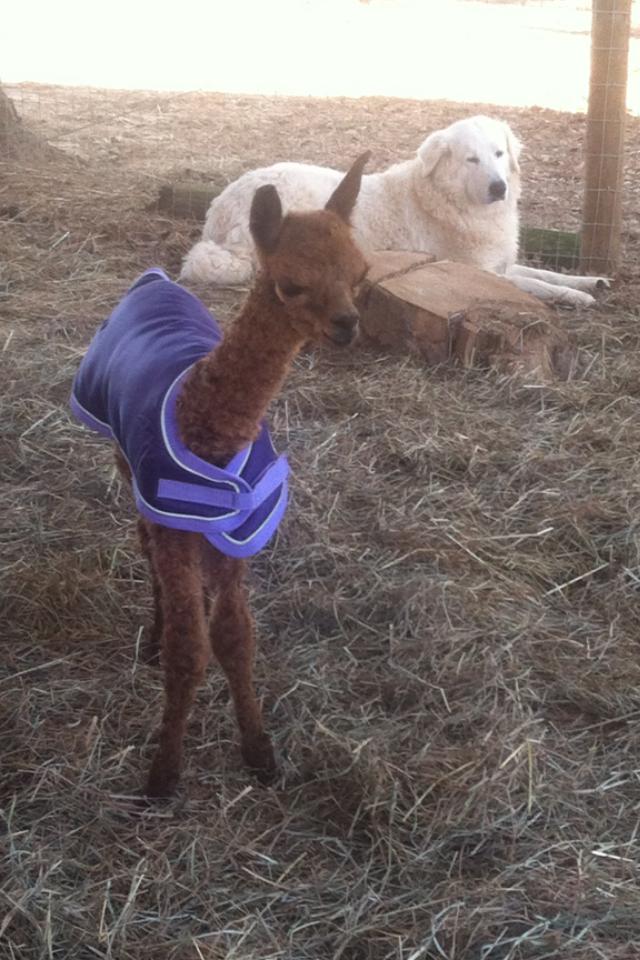 Newborn Baby Valentino.PNG