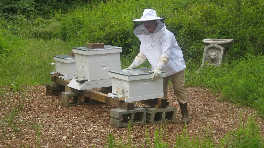 Beekeeping (linda) 046.JPG