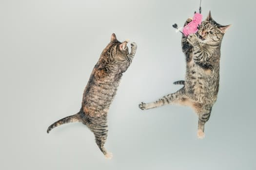 jumping-cute-playing-animals.jpg