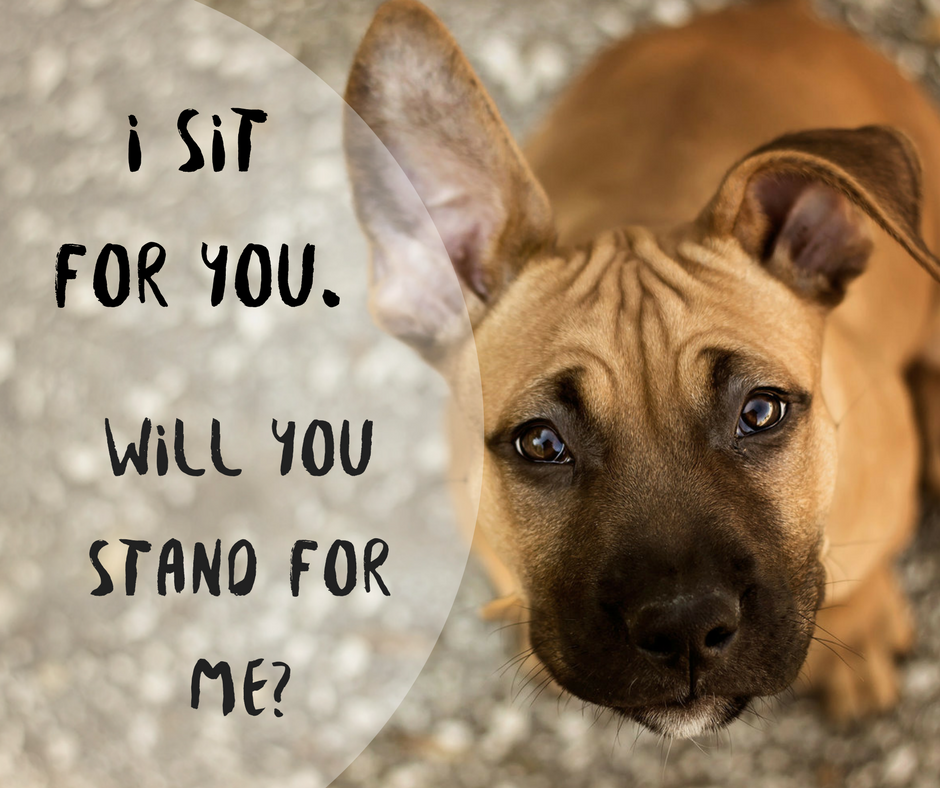 i sit for you will you stand for me. petculiar. pit bull. advocacy