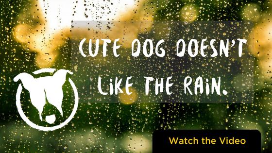 cute dog doesn't like the rain. Petculiar