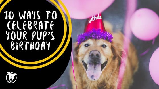 10 ways to celebrate dog's birthday. Petculiar