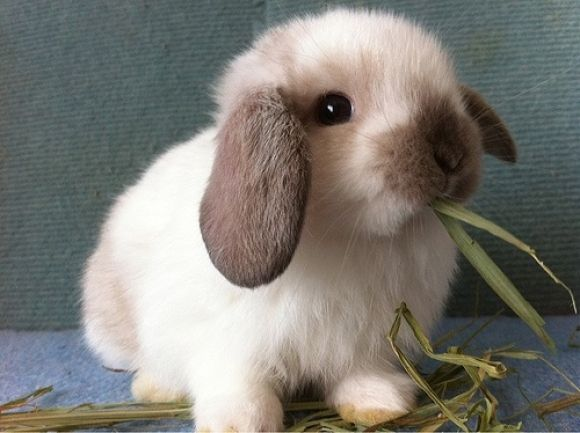 adorable cute small bunny rabbit. Petculiar. pets