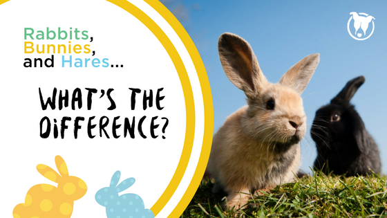 What's the Difference? Rabbits, Bunnies and Hares. Petculiar