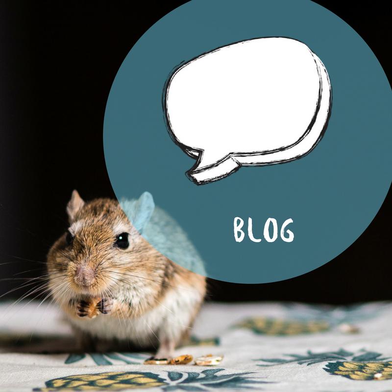 petculiar blog curious about pets.png
