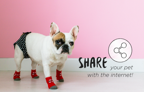 Share your pet with the internet. petculiar. french bulldog