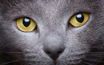 cat eyes. Look into my eyes. How cat's show affection. Pet blog