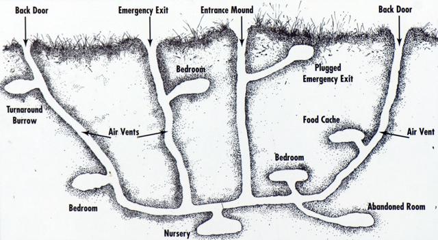 Prairie Dog Burrows and Rooms. Petculiar Blog