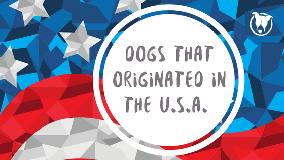Dogs that originated in the U.S.A.