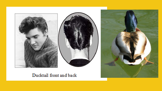 DuckTail Hairstyle. Curious About Pets. Petculiar
