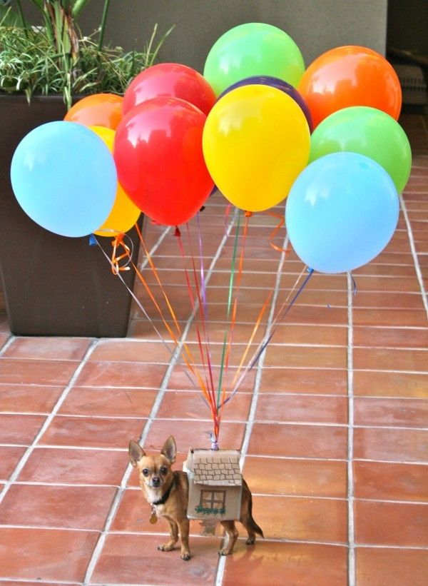 Up costume. Balloon house. Dog Costume. DIY Halloween