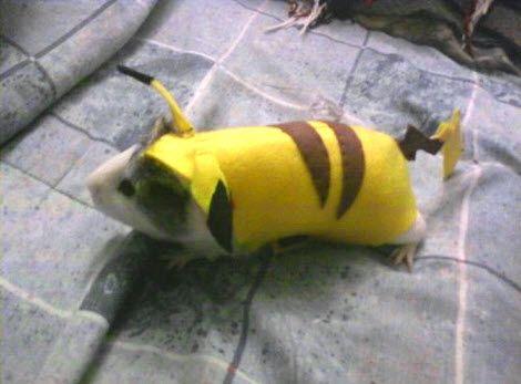 Pikachu hamster costume DIY Halloween