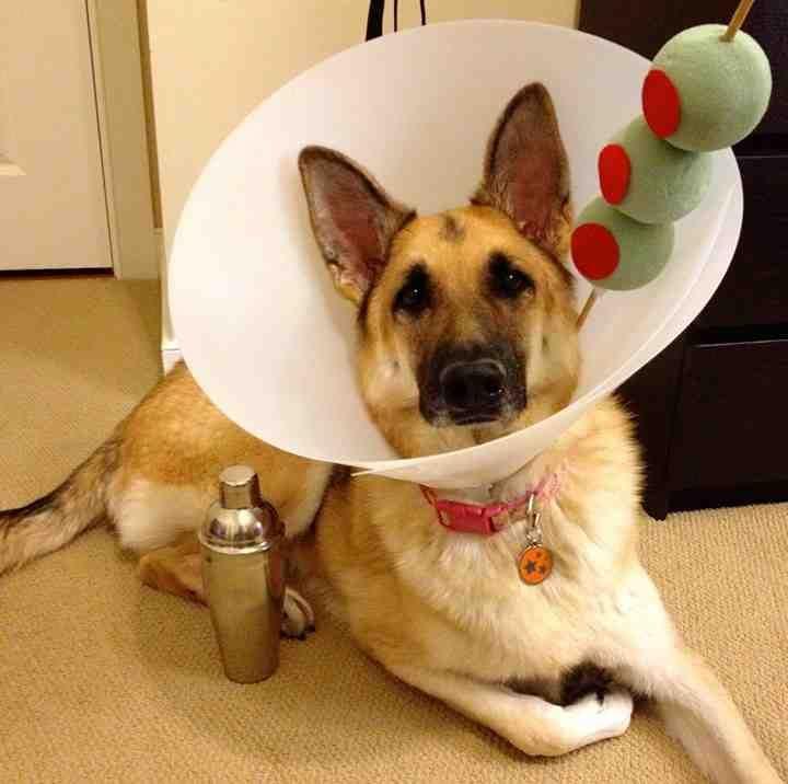 Martini Pet Costume DIY Halloween Ideas