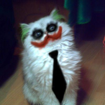 Joker pet costume DIY Halloween Ideas