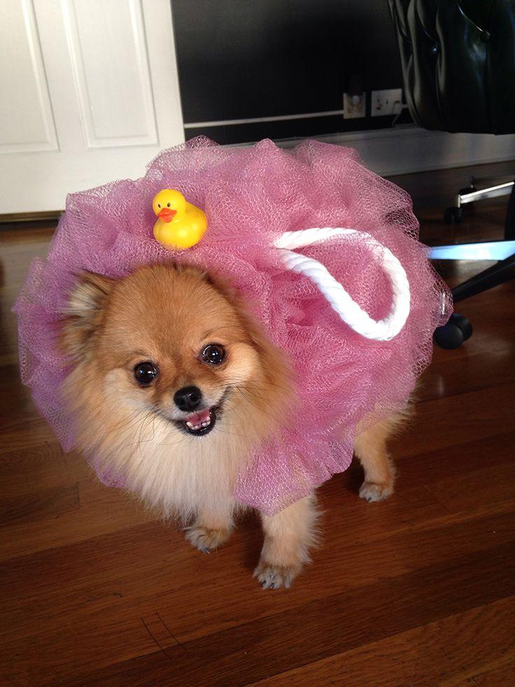 loofa pet costume diy halloween ideas