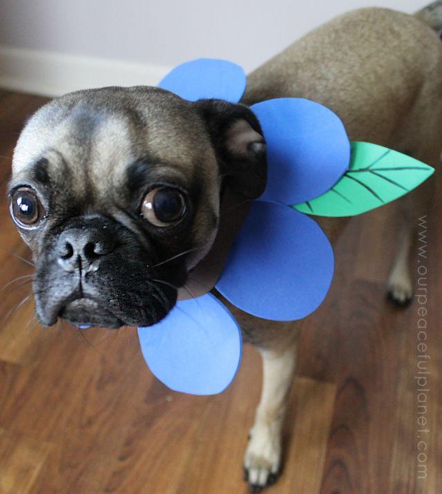 flower pet dog costume diy halloween ideas