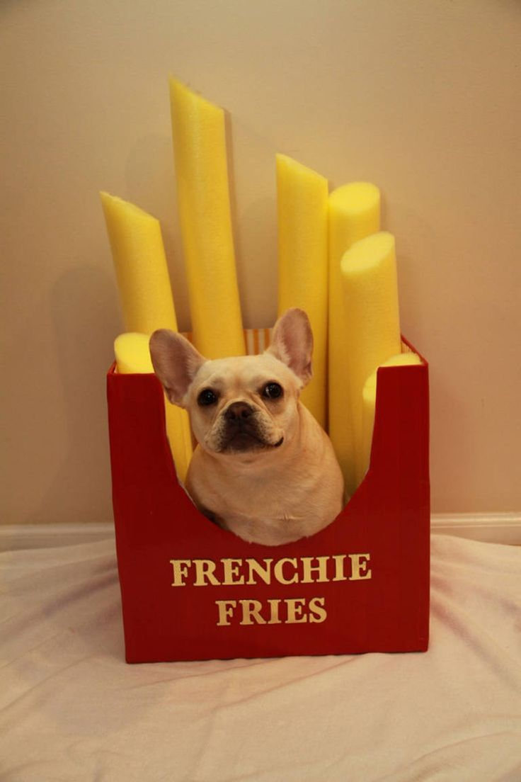 Frenchie Fries Pet diy halloween costume ideas dog