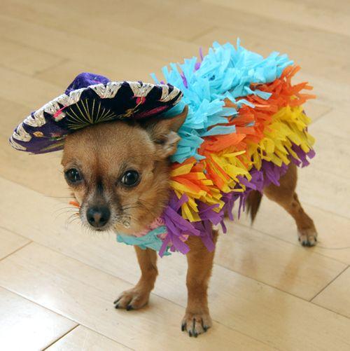 pinata pet dog diy halloween costume ideas