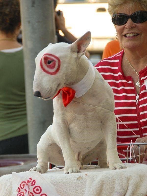 target dog bull terrier halloween diy costume ideas