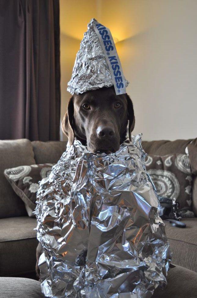Hershey Kiss Pet dog Costume Halloween DIY Ideas