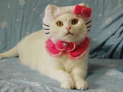 hello kitty cat pet costume idea Halloween DIY