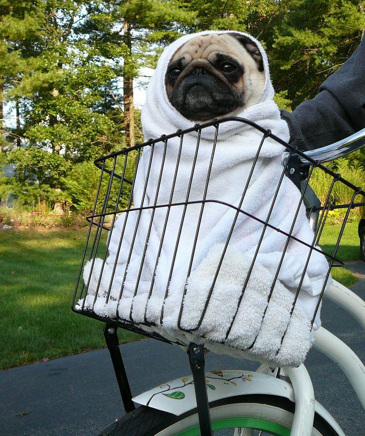 ET pet dog pug costume diy halloween ideas.jpg