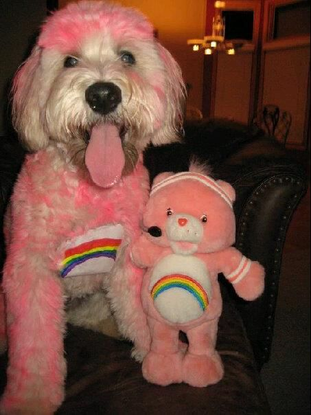 care bear pet dog diy halloween costume ideas