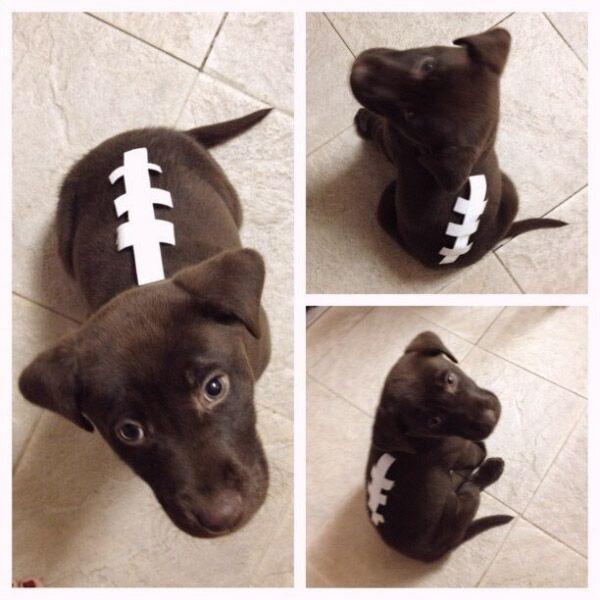 pet easy diy halloween dog football costume Halloween ideas