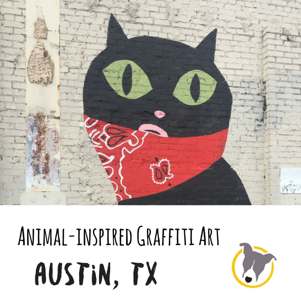 Animal Inspired Art. Graffiti Austin Texas