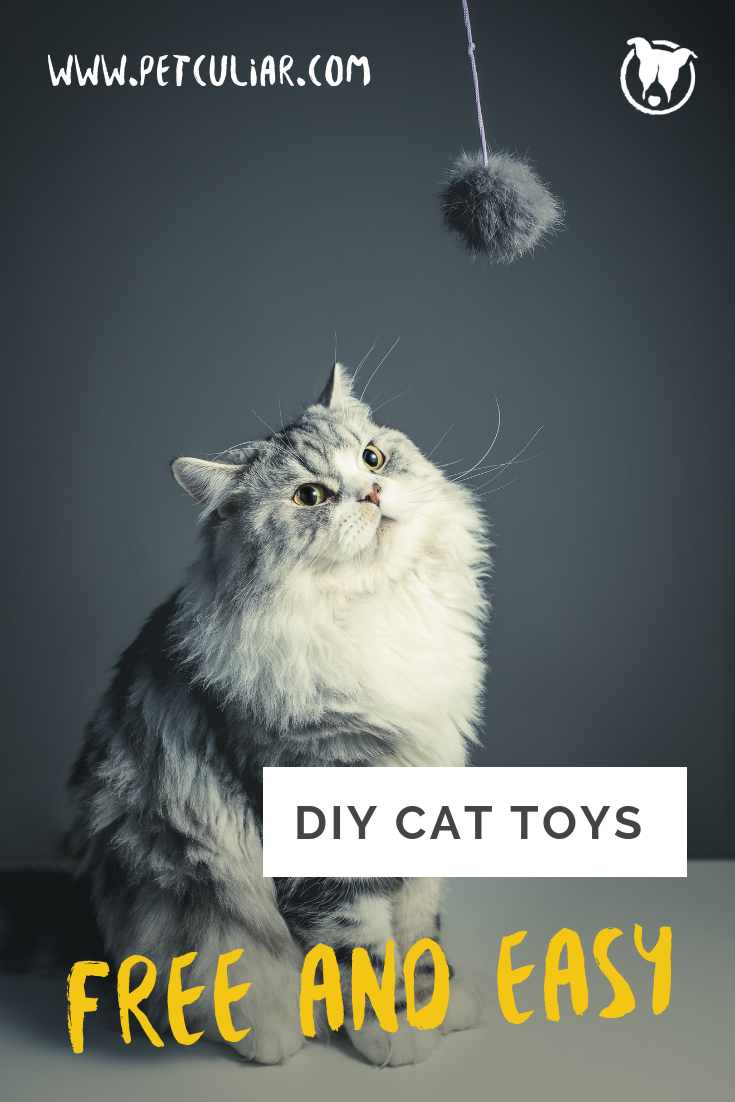 DIY Cat Toys. Absolutely free and easy to make. DIY Pet. Blog. Pet Blog