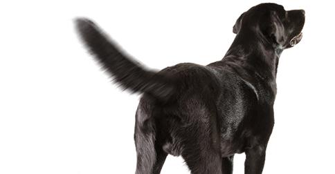 Dog Tail.jpg